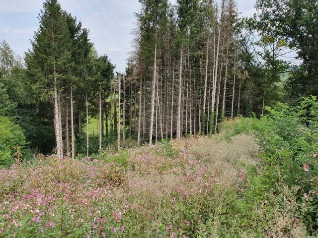 Baugrundstück - Gemmenich - #3807882-1